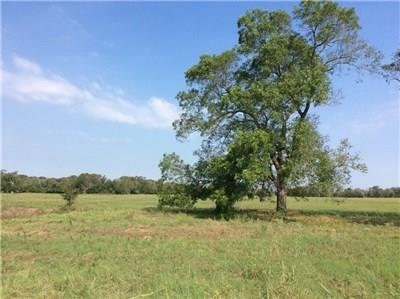 20 Acres of improved pasture and a beautiful site for a new home. Property has one farm pond and pecan trees to highlight the homesite. Property is bound by a seasonal creek on the south side of the property which has abundant deer, turkey, and hogs that enter onto the tract, plus fishing from the pond. Pasture in coastal so it would make a good hay meadow as well, or acres for grazing horses and cattle. Property has electricity and Coop water on site. Access by paved county road.