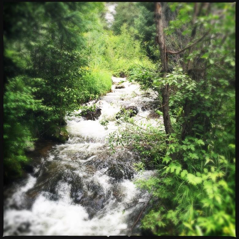 Willow Creek runs thru the property