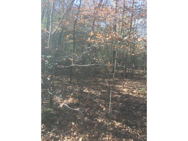4 acres near Glen Ella Springs. Easy access to Hwy 441. Great place to build your geteaway. Directly across from National Forest land. Easy access to Lake Rabun, Clayton, Clarkesville, Tallulah Gorge and Panther Creek State Park.