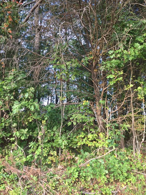 Surveyed 1.02 acre homesite. Wooded with no restrictions. Water and Electric available.