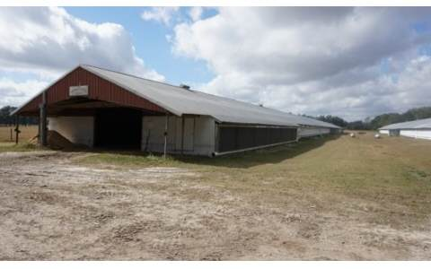 "This is a working Poultry and Cattle operation. Completely fenced & crossed fenced, watering troughs are located thru out farm. Square 160 acres. Consists of 40'x94' Hay Barn, 62'x60' compost & equipment shelter, (2) 40'x600' poultry houses (will hold 32,000 birds), (2) 4"" wells. Property has large Live Oaks scattered throughout w/ 1 mile of paved road frontage. Has a 1999 2,400 sq.ft. DWMH & a 3/2, 1999, 1,188sq.ft. DWMH for ranch employee. Farm could probably support 200 cows. Equipment to operate poultry houses will be included. Has several small water features. Property could easily be used for horses as well. This parcel could be easily divided into smaller parcels if the new owner decided in the future they did not need as much land."