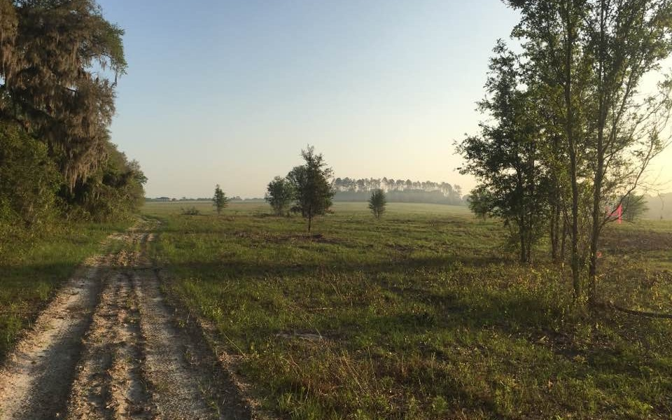 """Rolling terrain with scenic views. Mixture of pasture and hardwoods. Two 6"""" wells on property. 100 acres of pasture with balance in mixed hardwoods. Majority upland usable ground."""