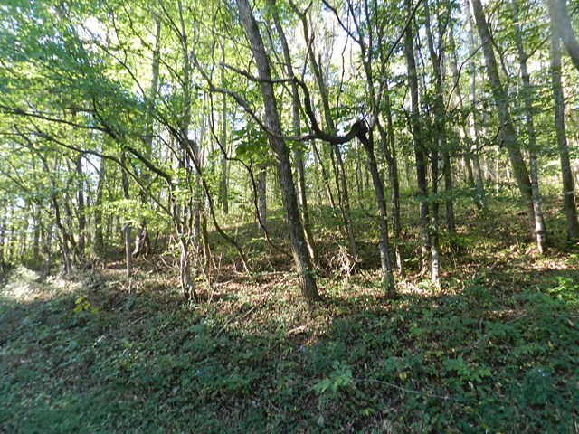 2.8 acre surveyed tract. Ready for your new home! Minutes to Roaring River Park for fishing and boating in the Cumberland River/Cordell Hull.