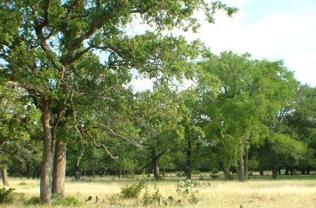 Scenic Hill Country ranch, rolling terrain, huge oaks,  outstanding hunting and close to town. The property a period rock and frame ranch house and outbuildings.  The landscape features a pleasant mix of rich fields, undulating meadows, woodlands and native brush. The perfect combination for either livestock or hunting, and just 60 minutes from Austin.