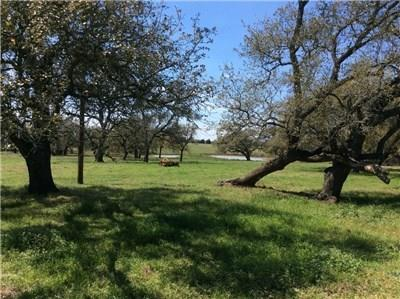 Beautiful rolling land w/improved pastures for cattle/horses. Acreage has several homesites. Land is a mixture of sandy & clay soils. Property has 1 lg pond w/option for more. Property has pastures & wooded areas. Boasts large live oaks throughout. Location of land tract is off of HWY 290 east of Paige,Tx. Land is currently used for livestock, however w/frontage to HWY 290 future commercial use is an option. Property is located across from the Cotton Bowl Raceway. Coop water & electricity on the property.