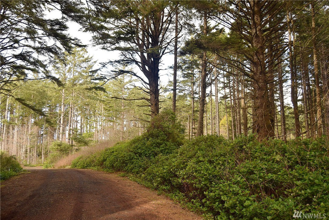 Beautiful Lot in Pacific Beach with private oceanfront access, and a neighborhood that is next door to Seabrook the newest beach town on the Washington Coast. Enjoy this extra large Oceanview property set in an old growth forest surrounded by mature trees and next to a beautiful private beach access. Water, Sewer, and power are in the road and ready to hook-up this lot is build-able and has plenty of room for a big house, detached garage, greenhouses, and yard space.