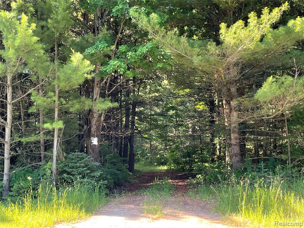52 acres of secluded wooded property.  Spring Creek trout stream cuts through the entire length of the property and is bordered with 90 to 100-foot tall white pines. Enjoy the serenity of the woods by day and fall asleep to the sound of the gurgling stream at night.  Perfect for hunting, recreation, or building your dream home. Existing cabin, basement, and superstructure centered on property not currently liveable.  Electric lines to the cabin. Minutes to I-75, downtown West Branch, restaurants, shopping, and material supply stores.  Additional acres of state hunting land within walking distance.  Unknown if baseboard heat in the cabin, well, or septic are in working order. Listing agent is related to the seller. The maps shown in the photos are neither legally recorded maps, nor any type of a legal survey and should never be used as such.