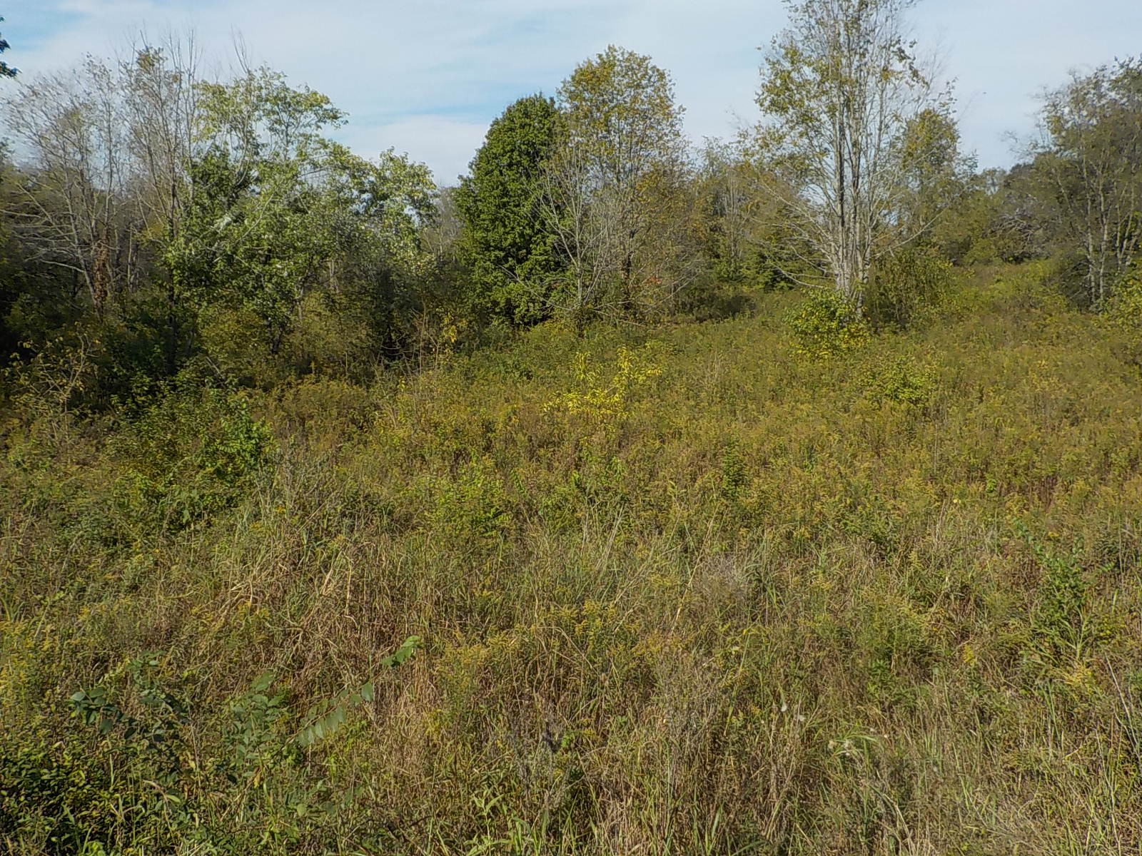 Great building tract located just outside the city limits of Gallatin - There are 2 other tracts available for purchase (5.29 acres and 5.01 acres) that adjoin on the left and right of the subject property.  This property would be ideal to build 1 house or buy all 3 tracts and build 3 houses.  Sewer is located close by - Selling subject to court approval