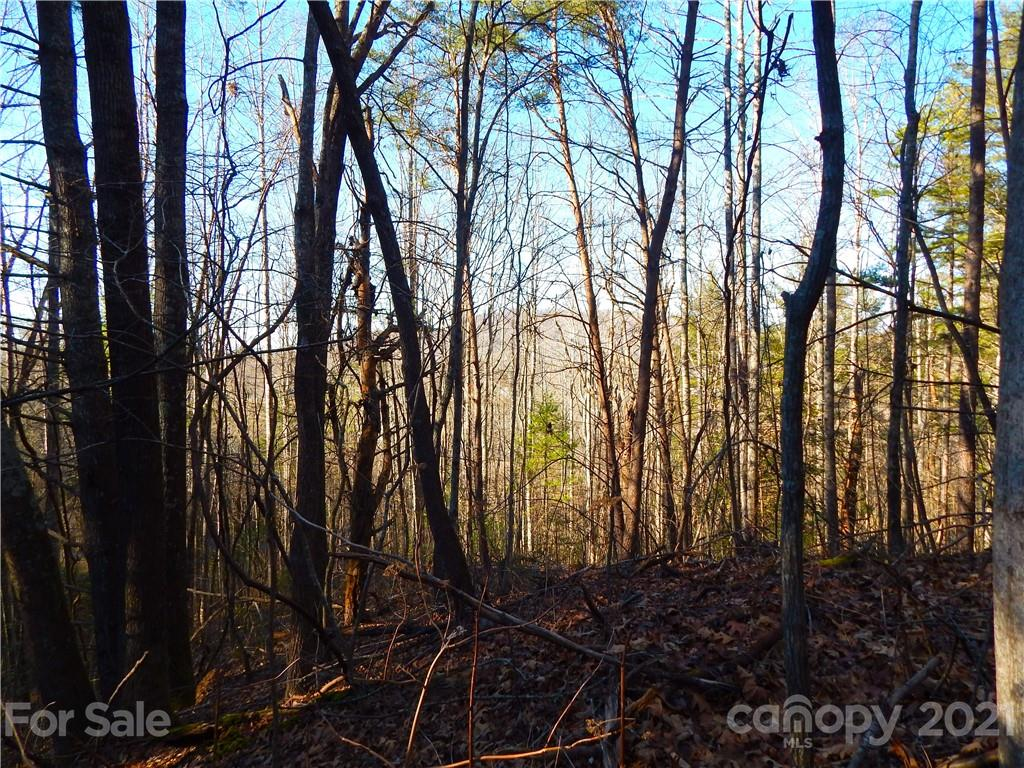 Located within a small development in the Hoopers Creek area, this lot provides a peaceful setting but is close to all of the amenities. Build your dream home on this wooded lot with winter views.