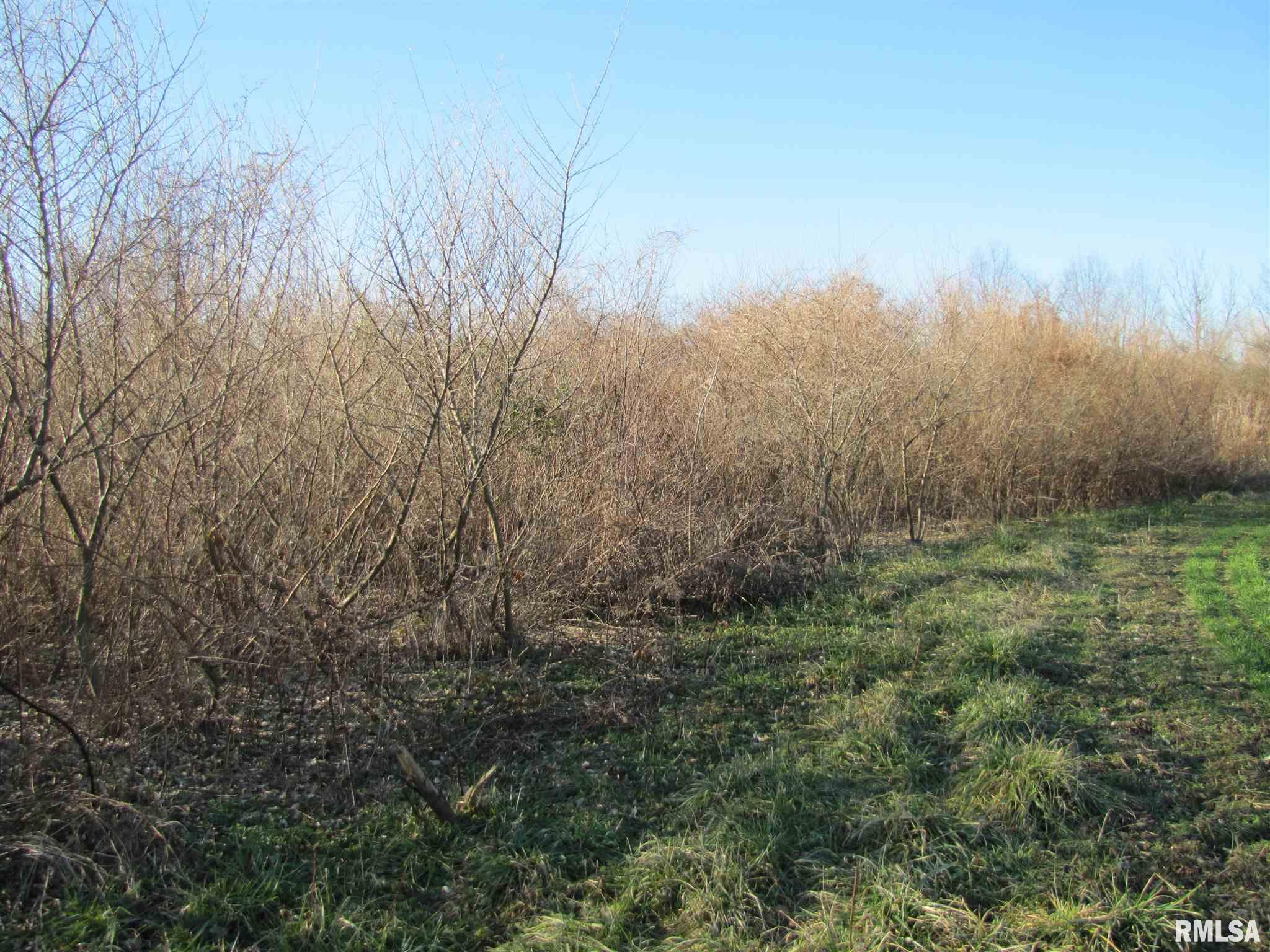 Looking for land in the country but not to far from town?  Over 60 acres with 49 acres of cropland.  Forestry CRP income of $2736 a year until 9/30/28.  Great place to hunt, farm or build a new home!