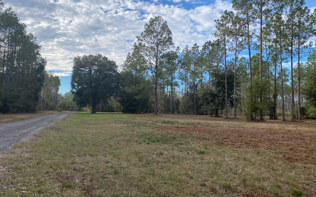 Great Recreational Tract and Pine Trees Growing, Mixed Hammocks and Hunting Paradise. Seller Will Finance with 50% Down.