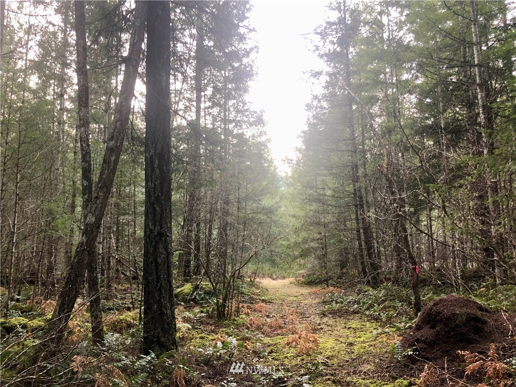 2 FORESTED ACRES! Rare, beautiful and spacious! Build your home or cabin on this private level lot, walking distance to Gifford Pinchot forest trails. Territorial views of the Goat Rocks and National Forest.  Quick easy access on paved Cannon Rd ... Per Google Maps it's 8 minutes to Packwood shops and restaurants; ~24 miles to White Pass Ski area; and ~17 miles to Mount Rainier National Park entrance.  Gate in place. No HOA. Needs well and septic. Power at the road.   Mountains, streams and rivers are your playground here! Offer Review Date Jan 26, 2021.