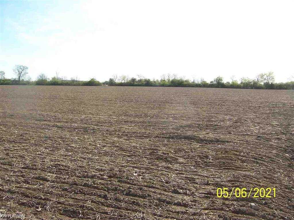 Large 22+ acres for future home site, recreation or farming. Close to M-19, city of Memphis and I-69. May consider Land Contract Terms. Crops are planted and farmer has right to harvest. Survey is complete.