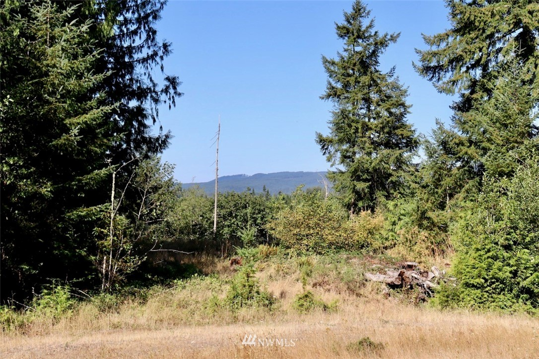 Come and walk this almost 5 acres (4.91) to build your dream home! 5 bedroom septic permit application & slope study are in the works.  This property is close to amenities but you will feel like you are in your own private oasis.  The property is located right across the street from Black River boat launch which connects to the Chehalis River. There is flat area for you to build your home or keep an RV on the property. Gopher study already complete as well!  Just need your vision!!