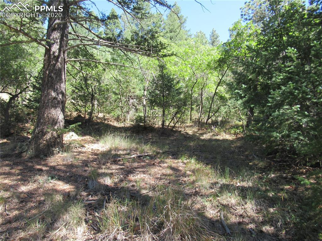 Private forested parcel in the lower park - Approx 6 minutes from the guard gate - Heavily treed w/ easy access & lots of sunshine too -