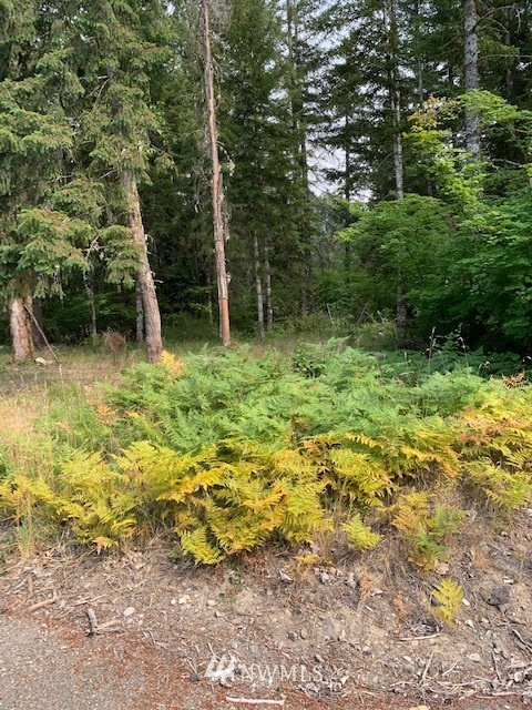 Beautiful lot close to town just waiting for your dream cabin, with  power close.   Many mature Fir trees and other species of trees for privacy.  Enjoy all that this area has to offer including 17 miles to White Pass Ski Resort, Mt Rainier and many hiking trails. Property is not in any HOA's.