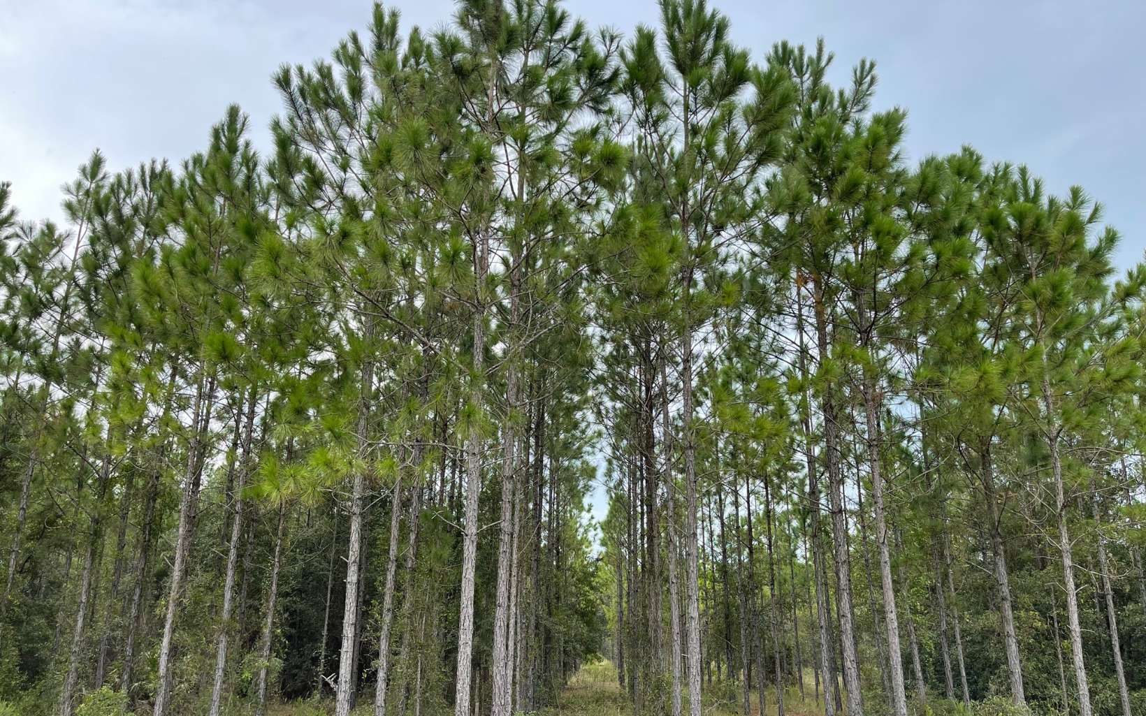 Great Investment, Live Out on the Land and Watch The Timber and Wildlife Grow. Many Uses For This Large Tract of Land. Live Where You Can Breathe Fresh Air With A Short Straight Drive to Gainesville, Approx 23 Miles. Tract is Between Newberry and Trenton. Lots of High Dry Land with some low spots.