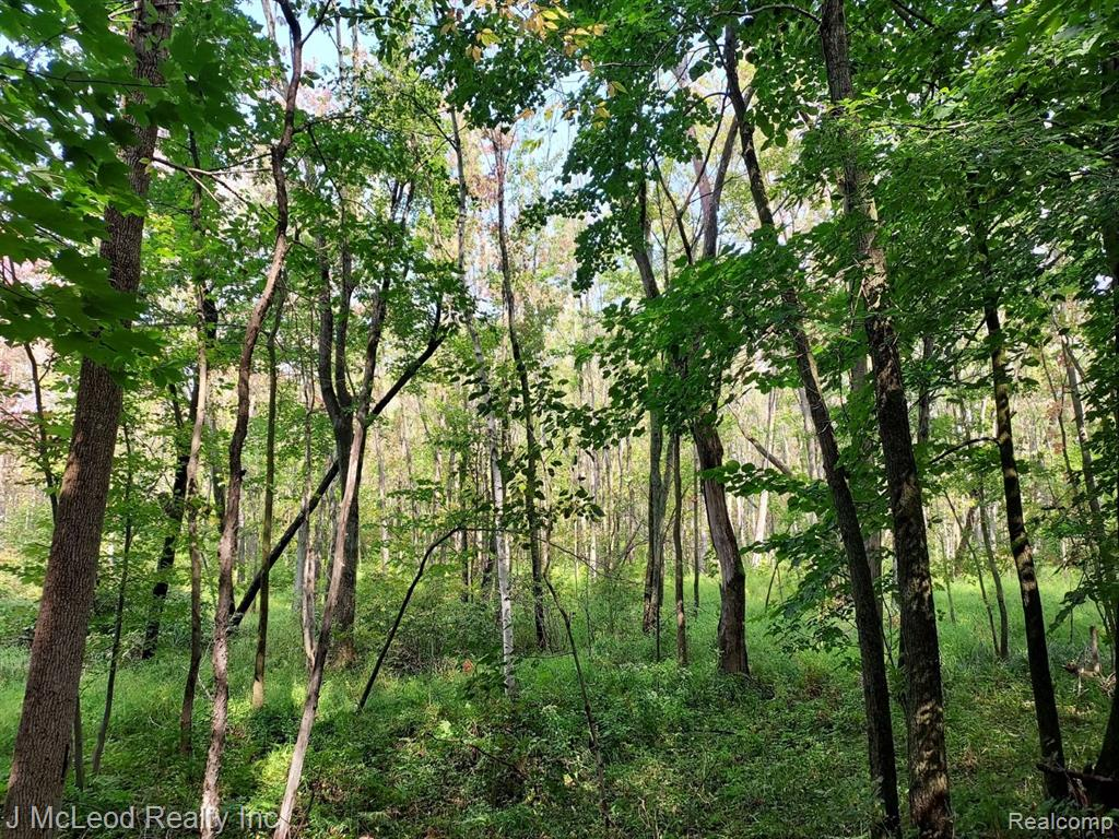 Hunter's Paradise, 48 acres of beautifully wooded acreage ready for you to explore and enjoy. Definitely not your run of the mill woodlot! Up front you'll find about 4 acres of high ground w/oaks, maples, poplars and softwoods. Perfect spot for your secluded home! You'll find about 20 acres of gnarly lowlands, couple of waterfowl ponds and wooded high ground beyond. It boasts of large deer, turkey, rabbits, duck and geese. Wildlife galore. 2 track trails, plenty of places for your hunting blinds! Don't wait, hunting season is just around the corner. Property is within minutes of Murphy Lake State game area and beautiful Murphy Lake.