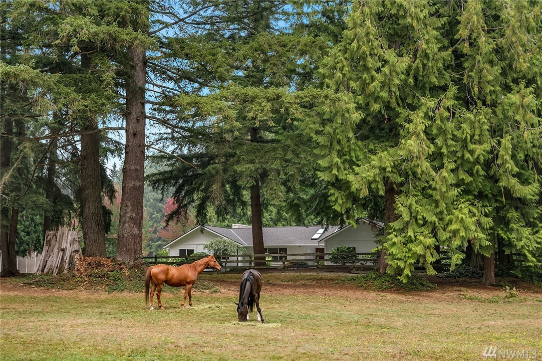 Serenity now! Escape the city to your rare 5.5 acre estate in idyllic Provan Woods. This centrally located rural dream is located just minutes from all major tech employment hubs, PCC, Downtown Redmond, Bellevue, Kirkland, and Woodinville Wine Country. Sunny yard, pasture, entertaining space, recreation and equestrian trails plus space to #workfromhome. Enjoy a brand new light and bright island kitchen, luxurious owner's suite, and picturesque 4 stall barn with loft. Space for chickens and eggs!