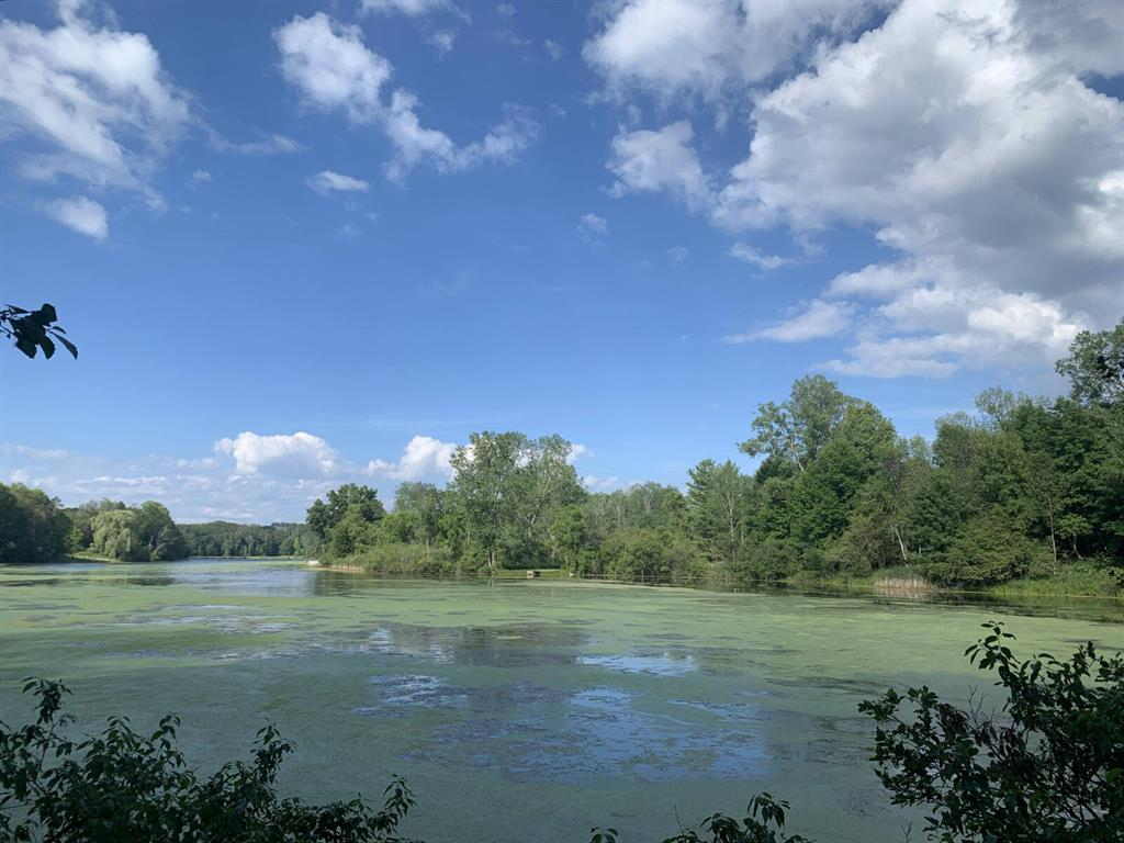 A rare opportunity to own 40 +/- acres with nearly 2000 feet of frontage on Lake Windaga. Located less than 30 minutes from Mt. Pleasant, Lake Windaga, a roughly 30-acre, private, no-wake body of water, offers excellent pike, bluegill, and bass fishing as well as outstanding waterfowl hunting.  The lake also acts as a nice watering hole for the countless whitetail deer that work their way through the property. With access from each direction of the property, a nice trail system throughout, 5 enclosed blinds, and multiple tree-stand locations, this parcel is set up perfectly for a successful 2021 hunting season. The property boasts multiple build and campsite locations in a quiet, secluded environment. A sportsman's dream, the options on this piece of ground are endless. Check it out today!