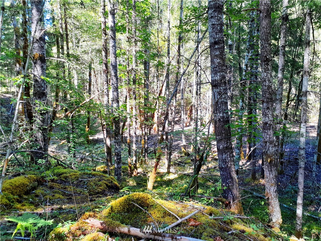 Wonderful 5+ forested acres with lots of potential. Build your dream cabin! Close to Packwood and Highway 12 access. No CC&Rs. Not in FEMA flood zone. WOW!