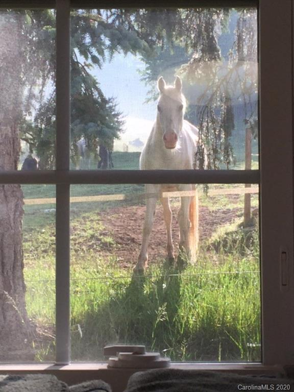 Dreaming of a property where you look out your window straight into your horses eyes?