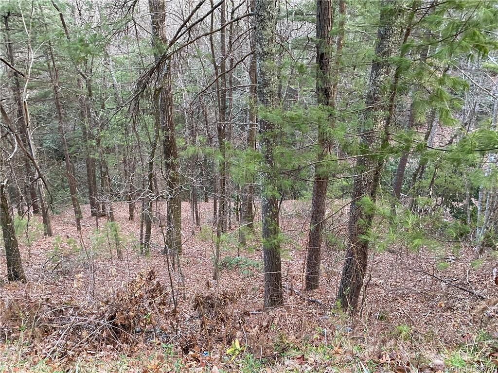 Nice .39 acre wooded lot in quiet community in Henderson county. Only 25 minutes to Main st. Hendersonville. No restrictions on what can be built, so the possibilities are endless.