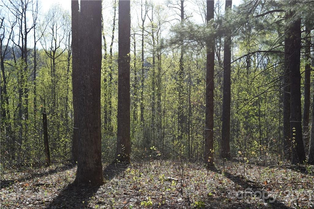 One of the flattest, builder and budget friendly lots in Kenmure. Lot has active septic permit, is ready to build upon and has a privacy screen of tall Leland cypress trees along Pinnacle Mountain Road. 