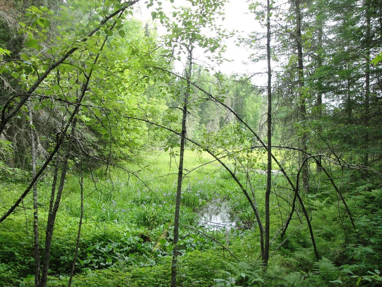 Beautiful, heavily wooded 20 acre parcel minutes from Goodland. High ground and one low spot with natural flowers and watering area for wildlife. Amazing, untouched acreage close to Pancake Lake. Excellent building site.