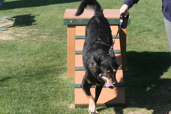 Dogs enjoy new agility equipment in Florence, Arizona.