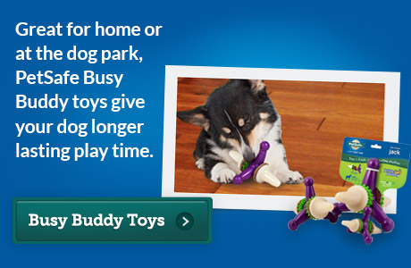-Busy Buddy 2013