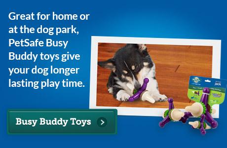 -Busy Buddy 2013