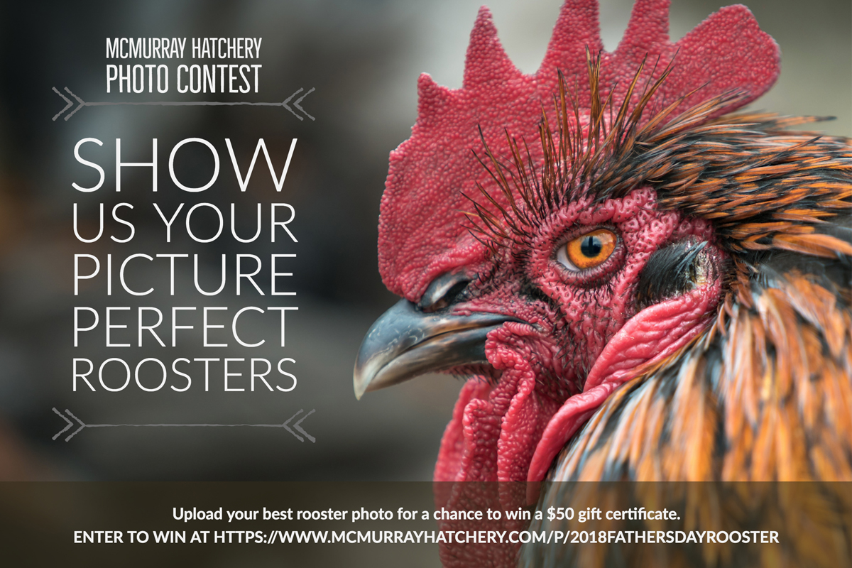 McMurray Hatchery | 2018 Father's Day Photo Contest | Show Us Your Rooster
