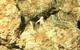 Big Kahuna - INDICA - 19.7% THC