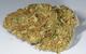 Lemon Thai Haze - Indoor Organic