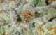 Jack Straw (Sativa) - TGA Subcool