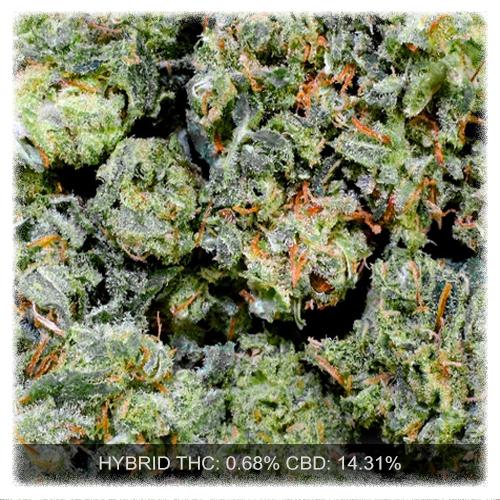ACDC (High CBD)