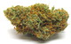 ***Girl Scout Cookie (Hybrid) Gold Cap Special***