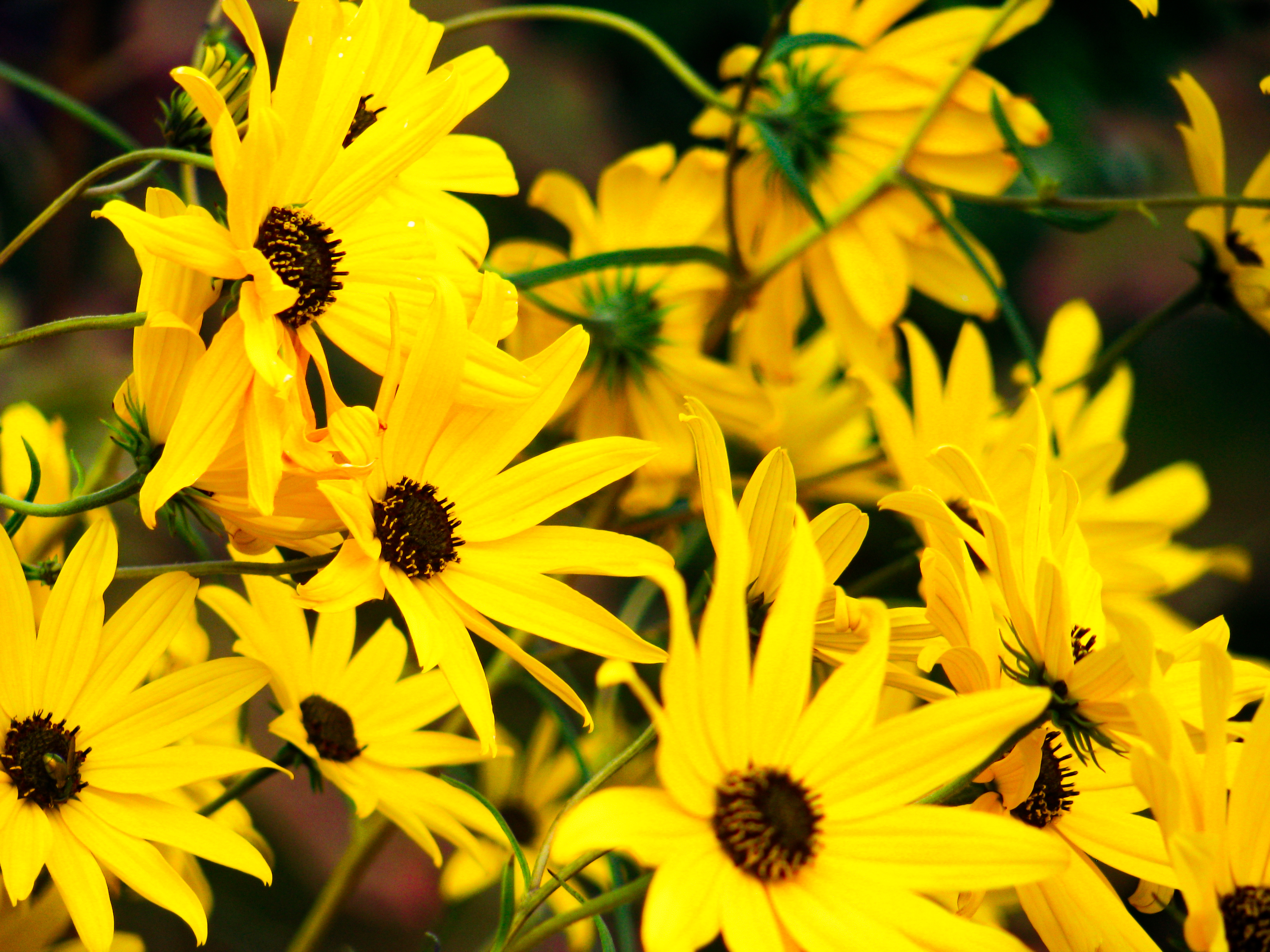 Yellow and black flowers mmt yellow and black flowers download mightylinksfo