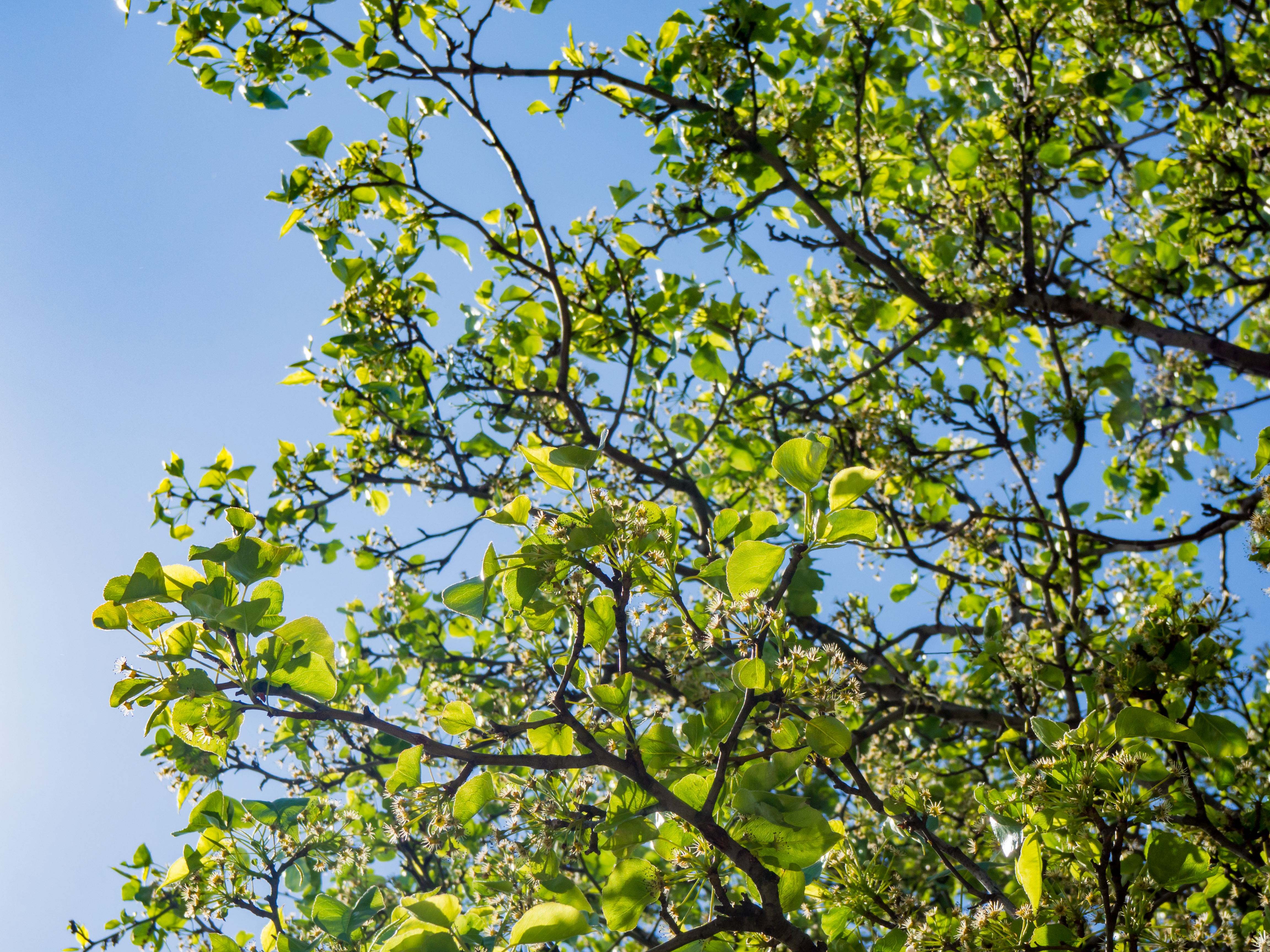 green leaves and branches u2013 mmt
