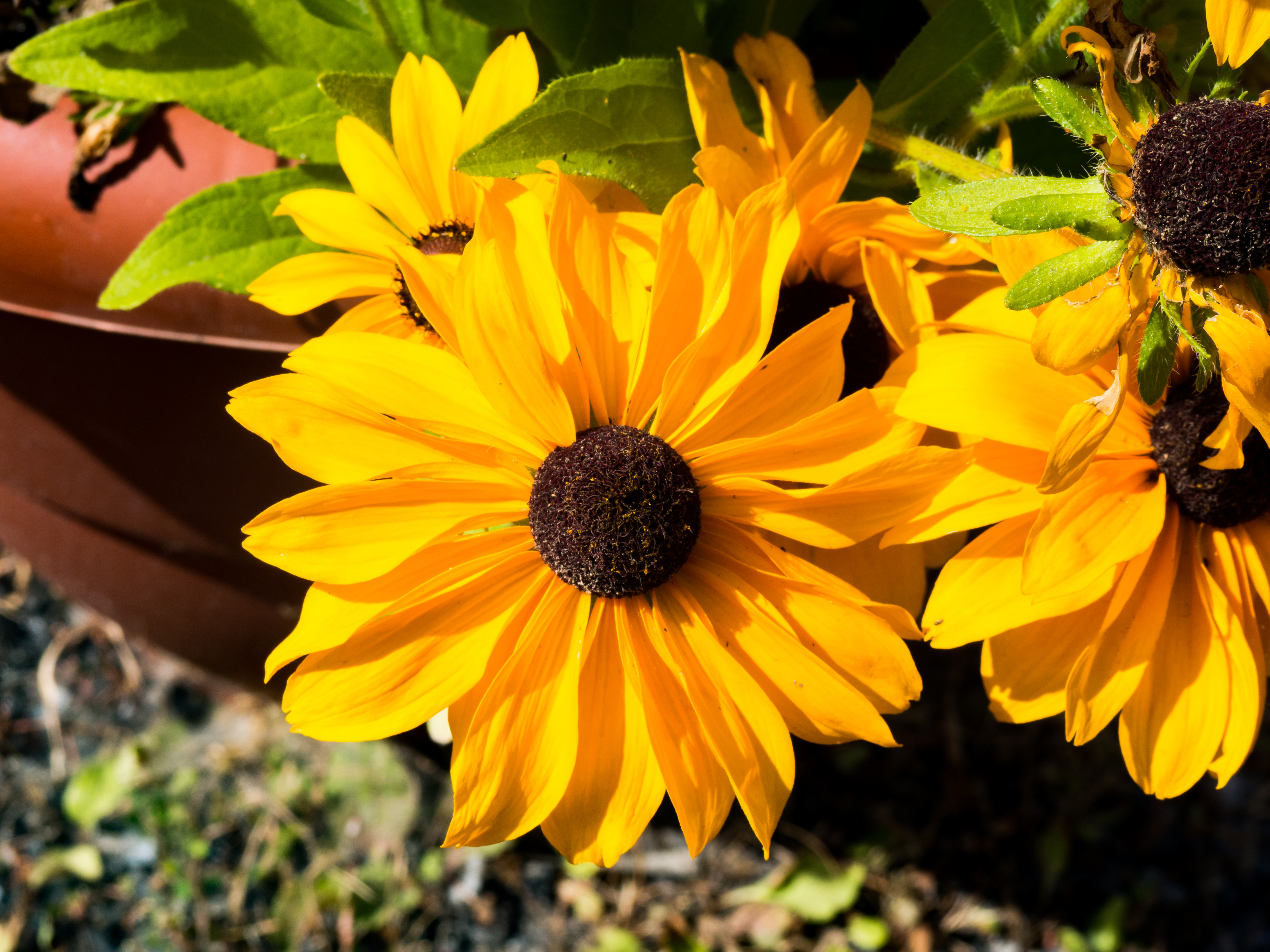 Yellow And Black Flowers Mmt
