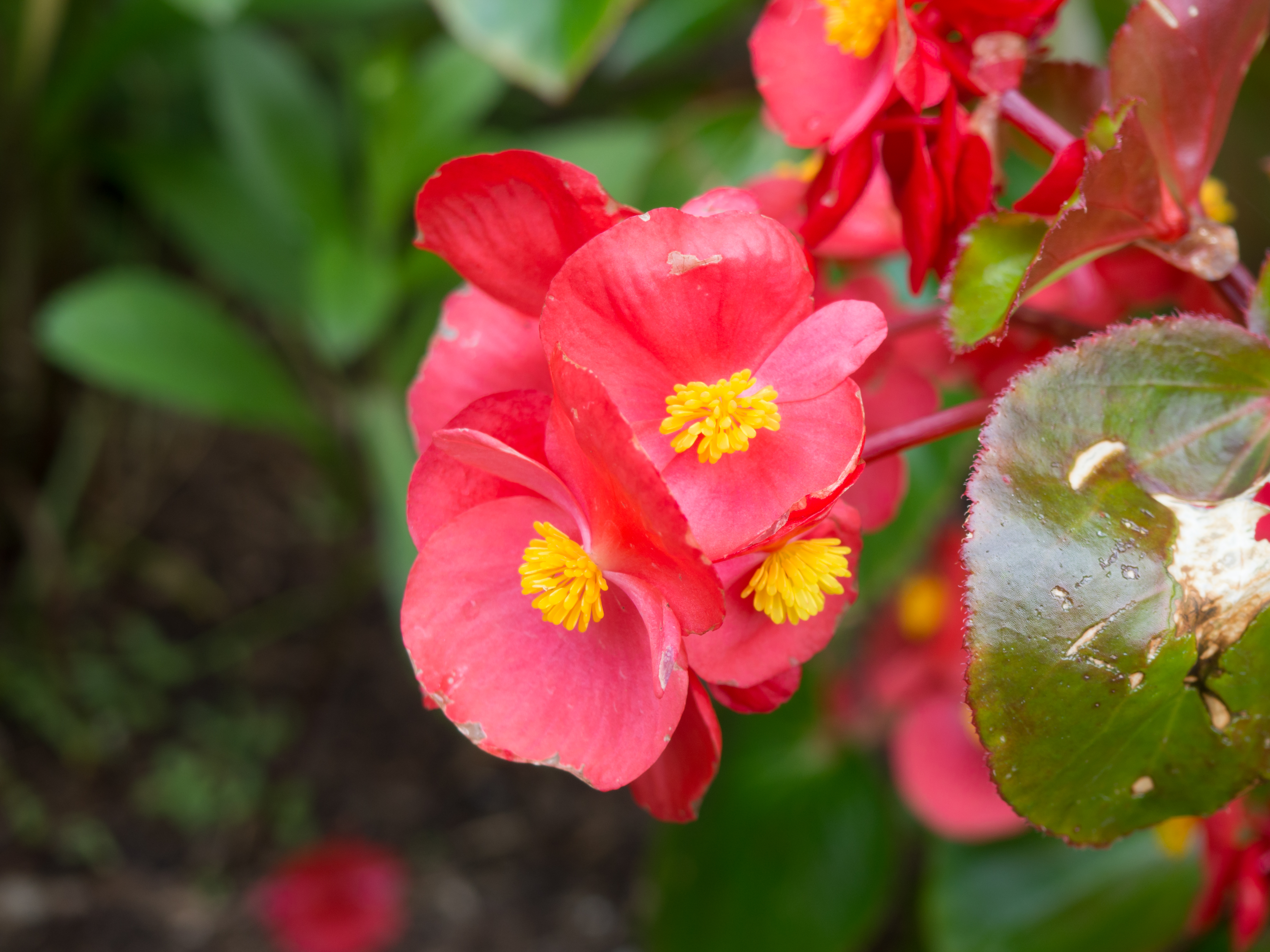 Red And Yellow Flowers Mmt
