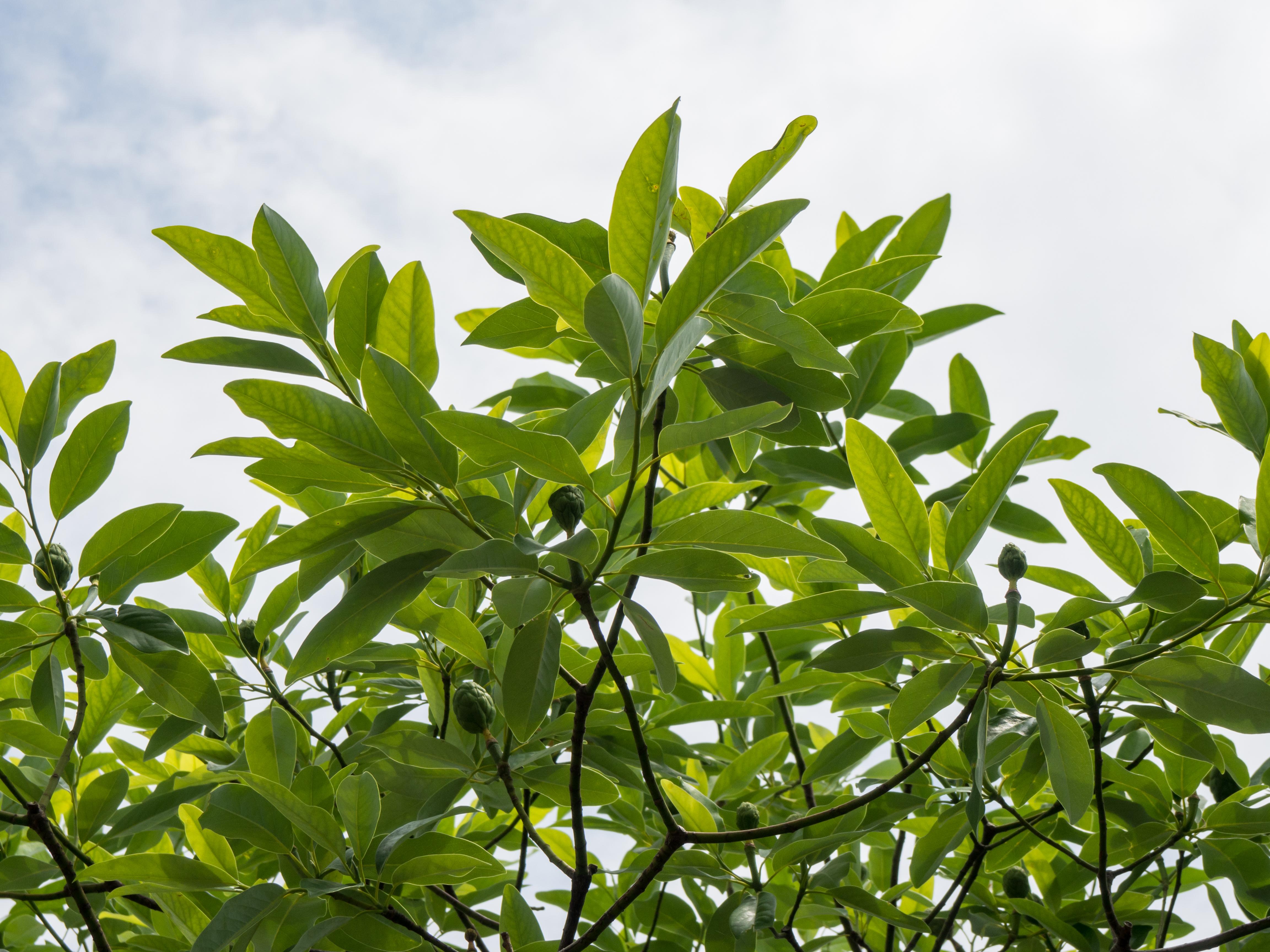 trees u2013 categories u2013 mmt