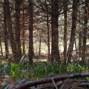 Անտառի շունչը  Լուսանկարը՝ Վալեր Հարությունյանի