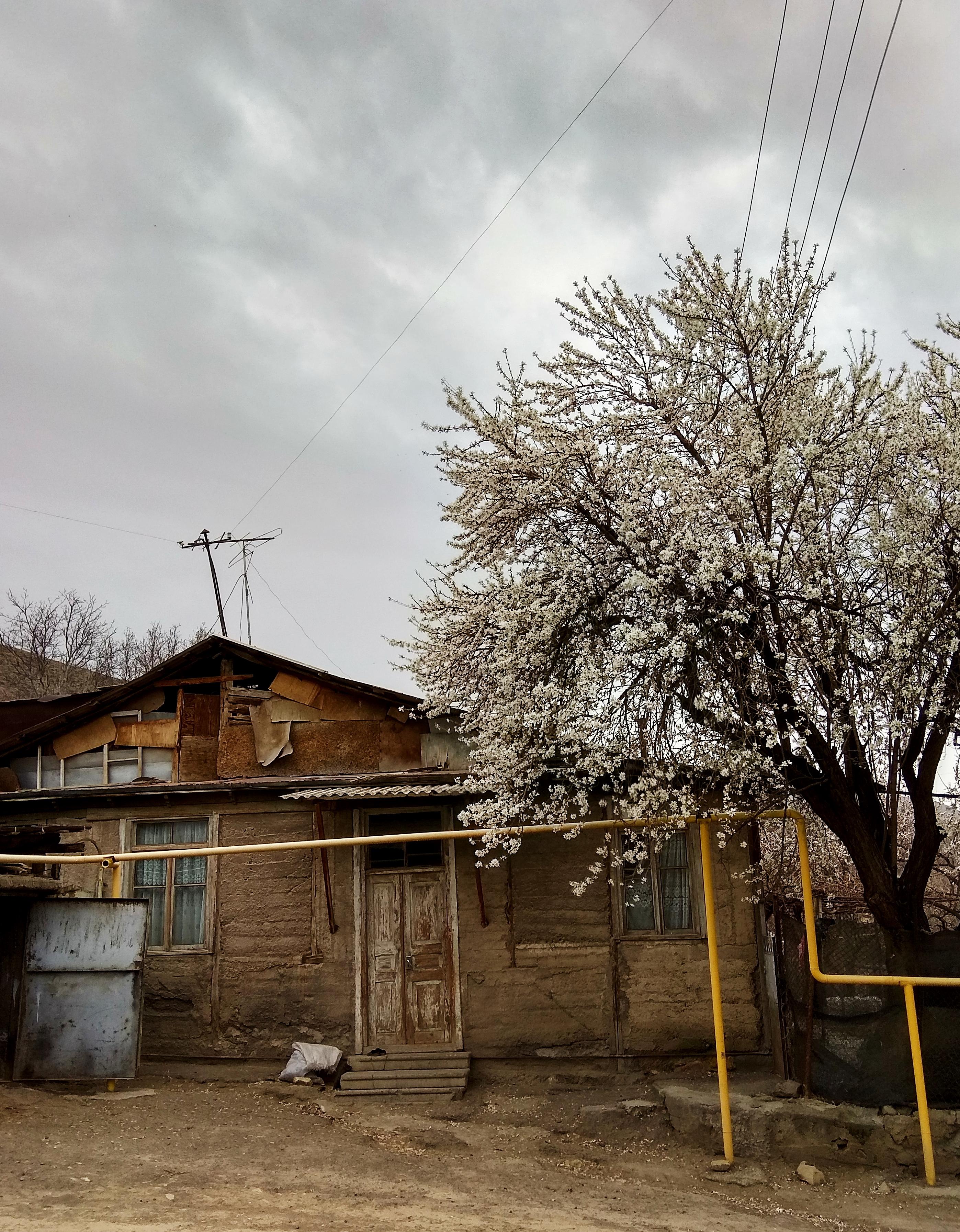 Լուսանկարը` Լուսինե Կարապետյանի