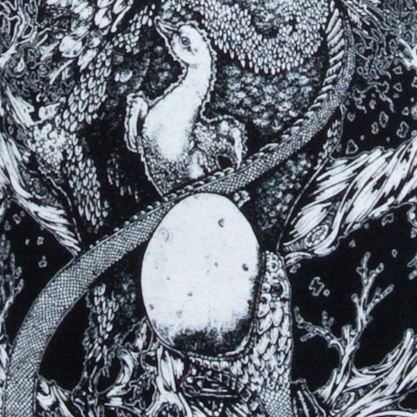 Black Swans Of Ash