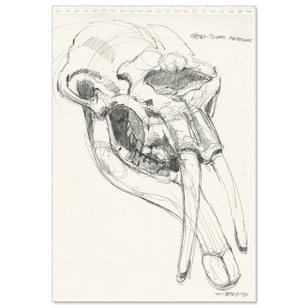 shovel-tusked mastodon