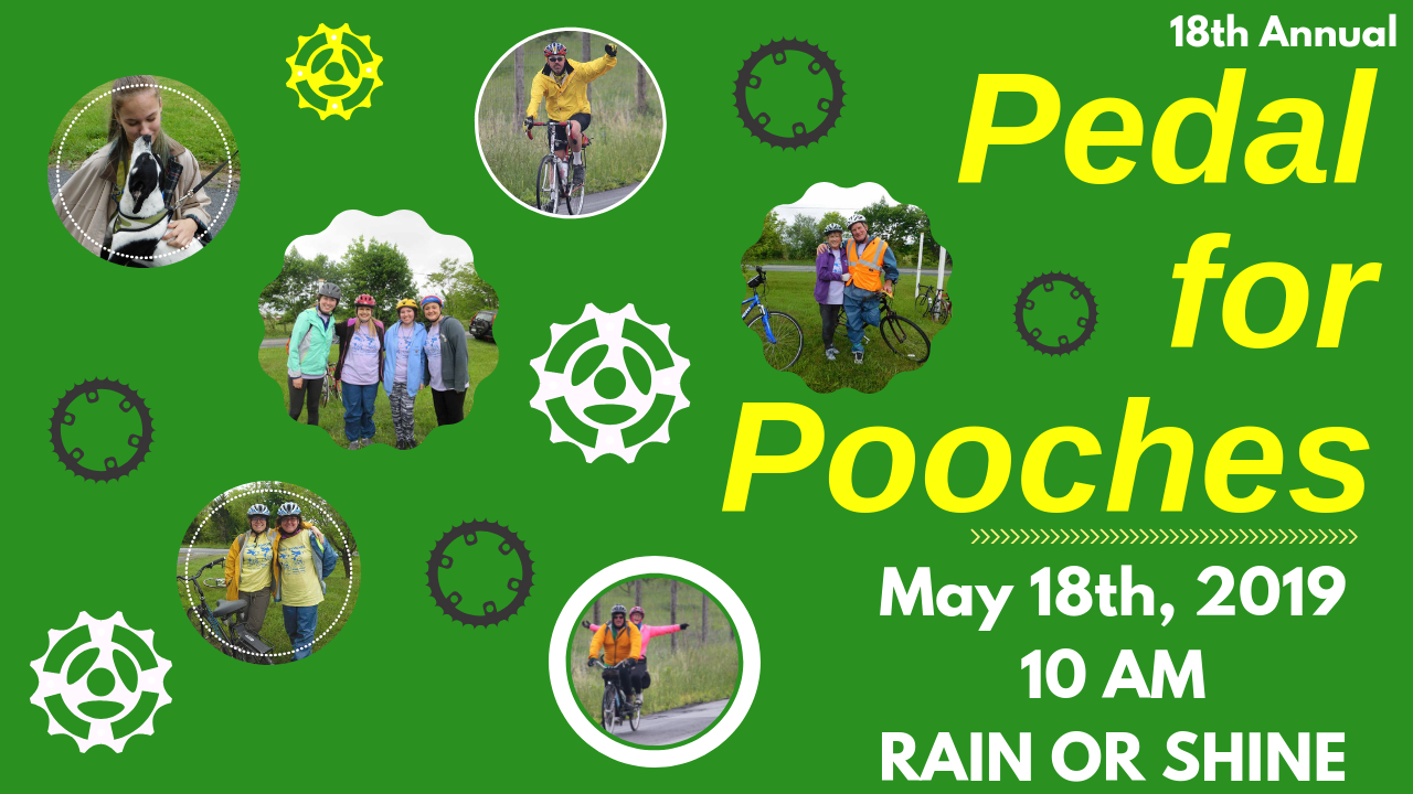 Big copy of pedal for pooches email header