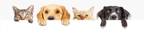 Animal banner image