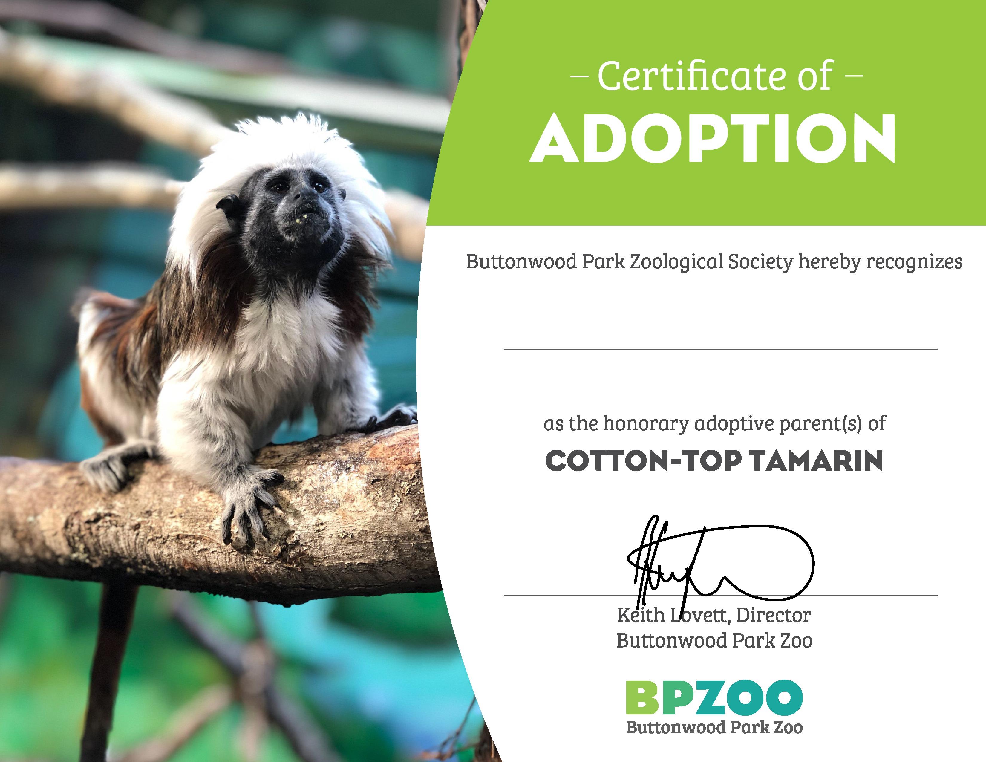 Adopt an animal digital cottontop page 0
